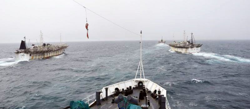 """Imagen destacada de la nota """"Pesca de calamar en el Atlántico Sur""""."""